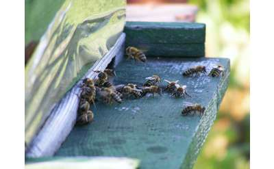 Bees can be a real problem in the summer. Luckily, Absolute Pest Control knows how to manage these seasonal infestations.