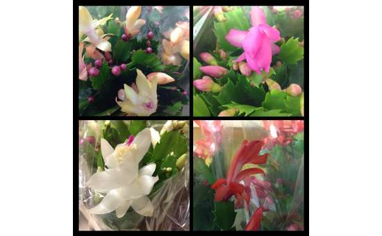 Meme S Florist Amp Gifts In Corinth Ny Find Fresh Flowers