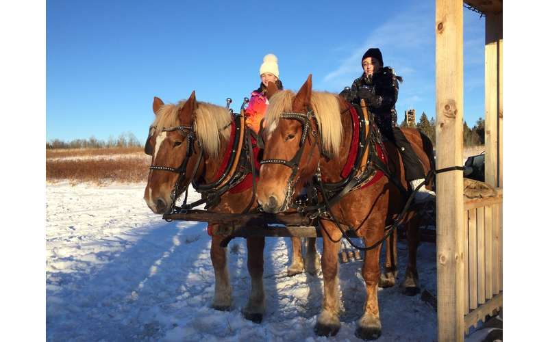 Country Dreams Farm  and    Adirondack Sleigh Rides (10)