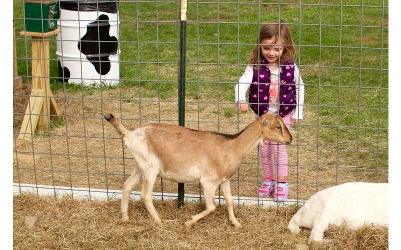 See the farm animals up close at the petting zoo.