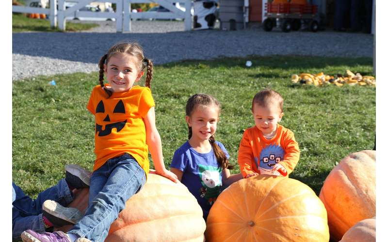 Just want to relax? Hang out on some of the giant pumpkins at the farm.