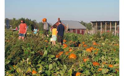 Pumpkin picking is one of the most popular fall activities at Ellms Family Farm.
