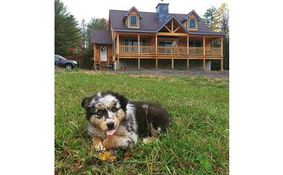 a calico-looking dog sitting in the grass in front of a house with a beautiful porch and side door