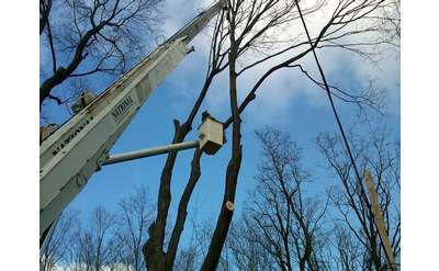 C&D is the best tree service in the Capital District & Southern Saratoga County
