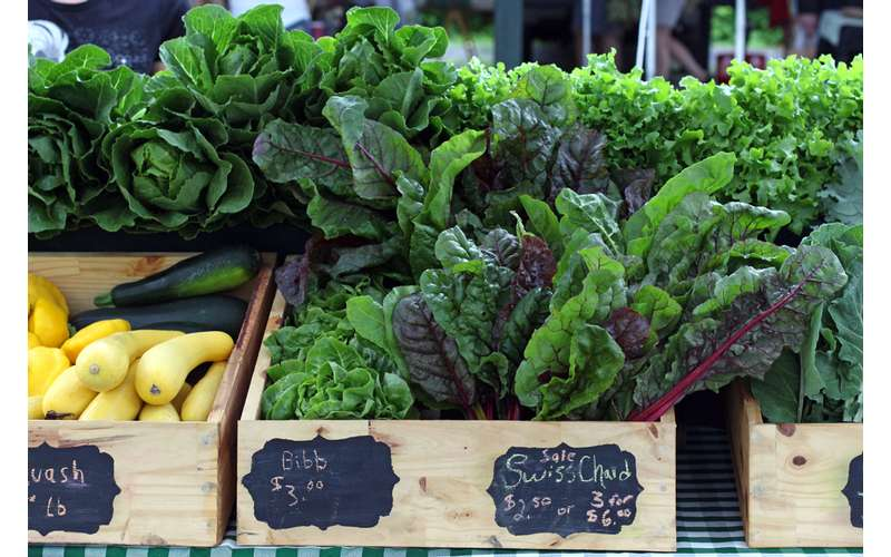 Swiss chard, bibb lettuce, and squash are just some of the veggies sold at the summer market.