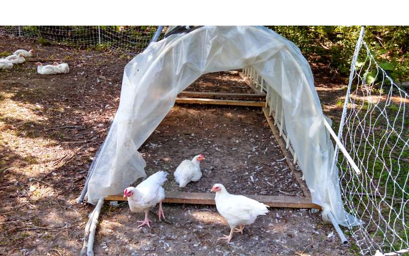 See chickens and other farm animals and help out with farm chores.