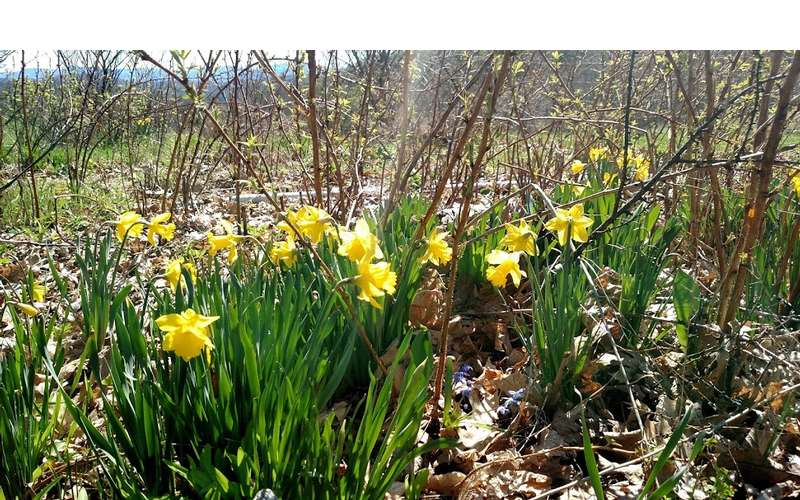 You can see flowers coming up just in time for spring on your walk around the property.