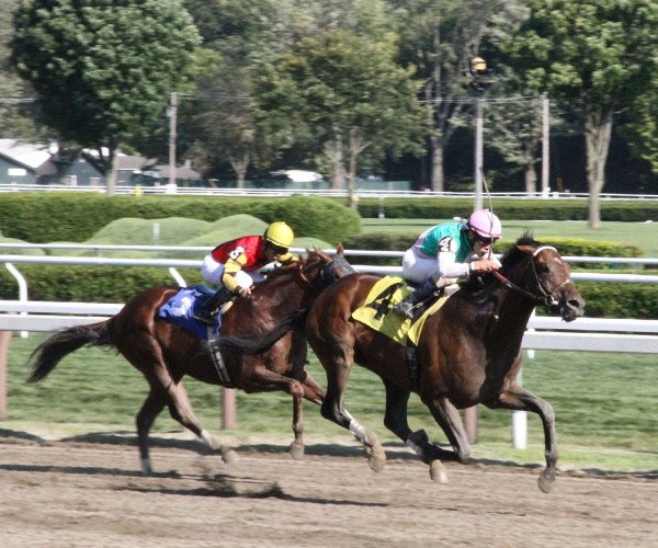 horses racing at saratoga race course