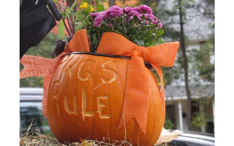 a pumpkin with the words pugs rule carved on front