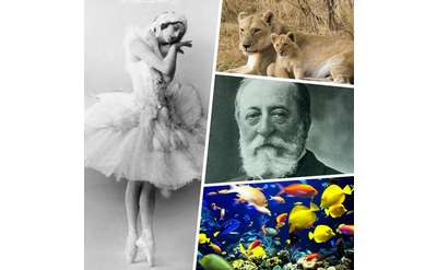 A ballerina, tigers, a mans portrait and colorful school of fish