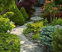 stone walkway with plants