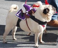 dog in costume