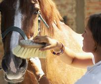 girl brushing a horse