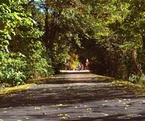 bike path in fall
