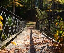 bridge with leaves