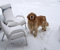 Dog standing next to lawn furniture in the snow