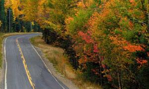 road near fall foliage trees