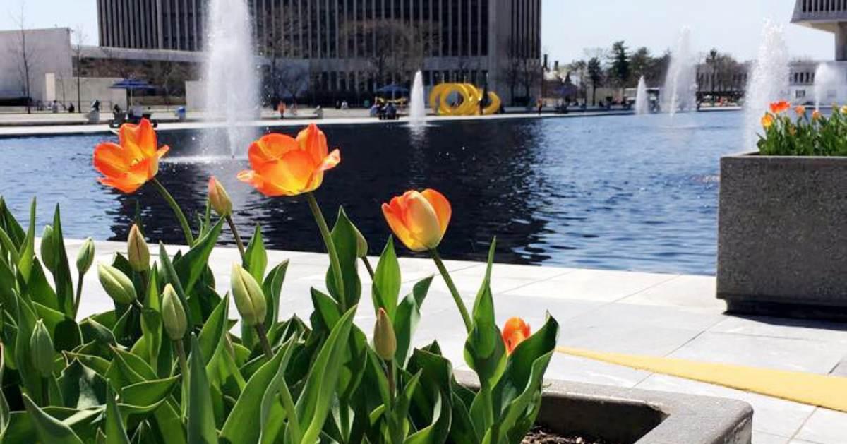 view of orange flowers near a pond