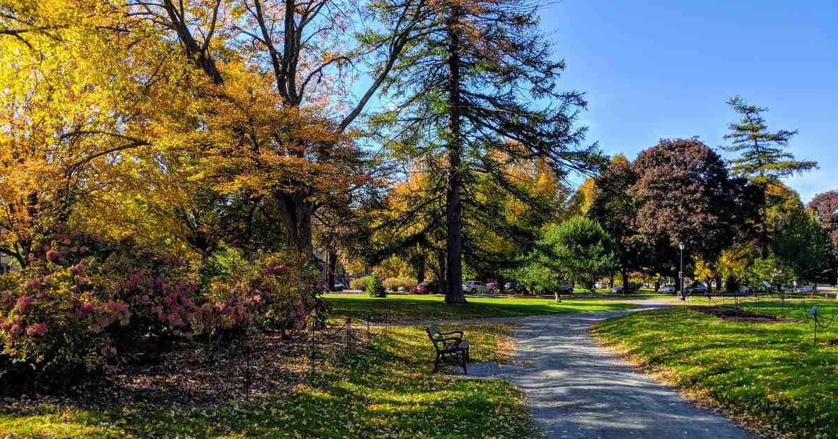 public park with leaves with shades of orange color
