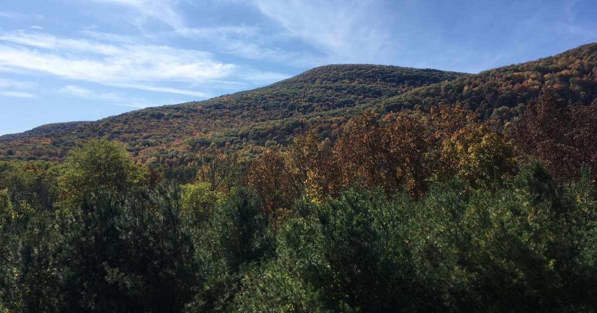 view of mountain with fall colors