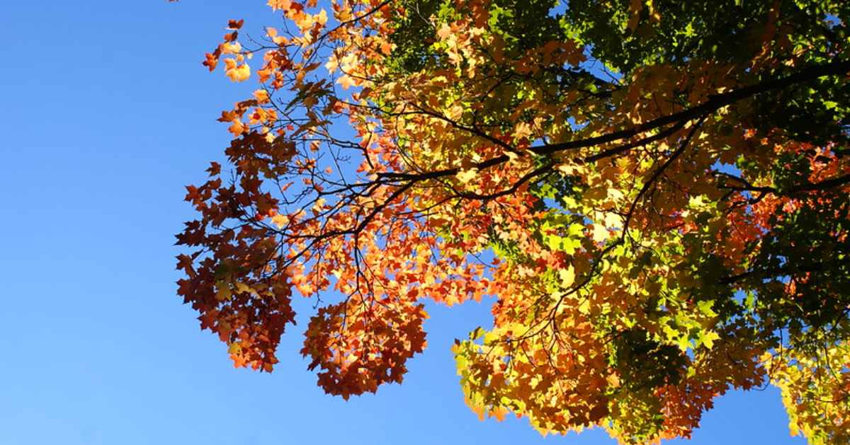 colorful leaves on tall trees