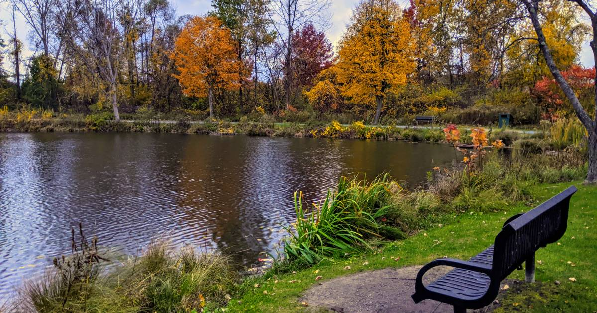 park bench and pond in the fall