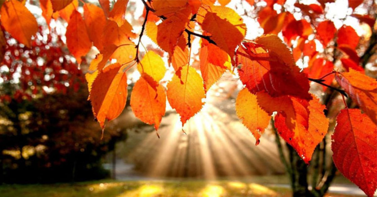 sunlight shining through the trees with orange leaves