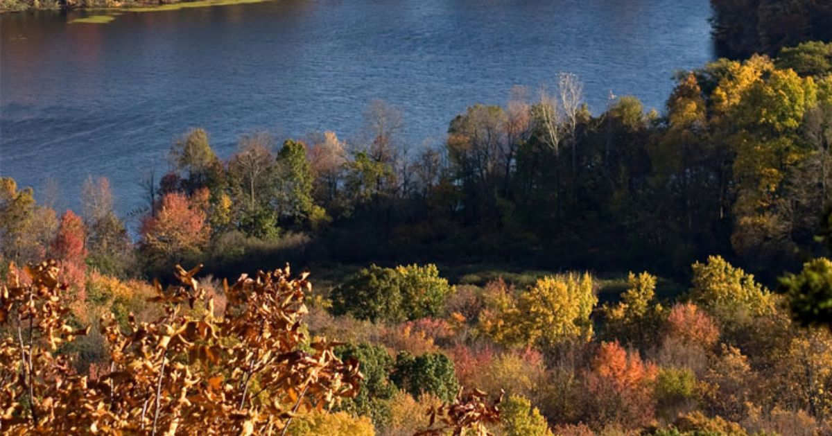 view of fall foliage and a waterway