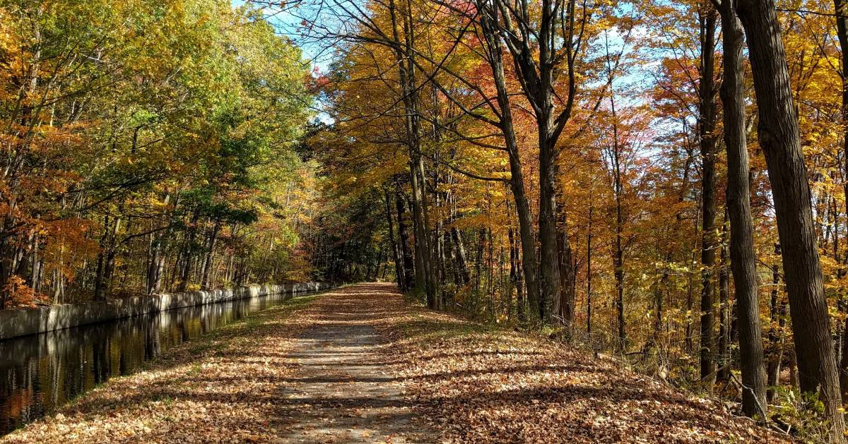 path in woods by canal in fall