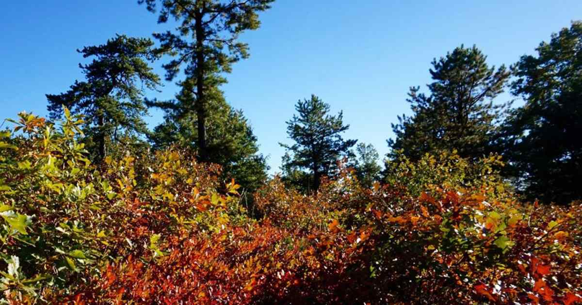 trees with green and red leaves