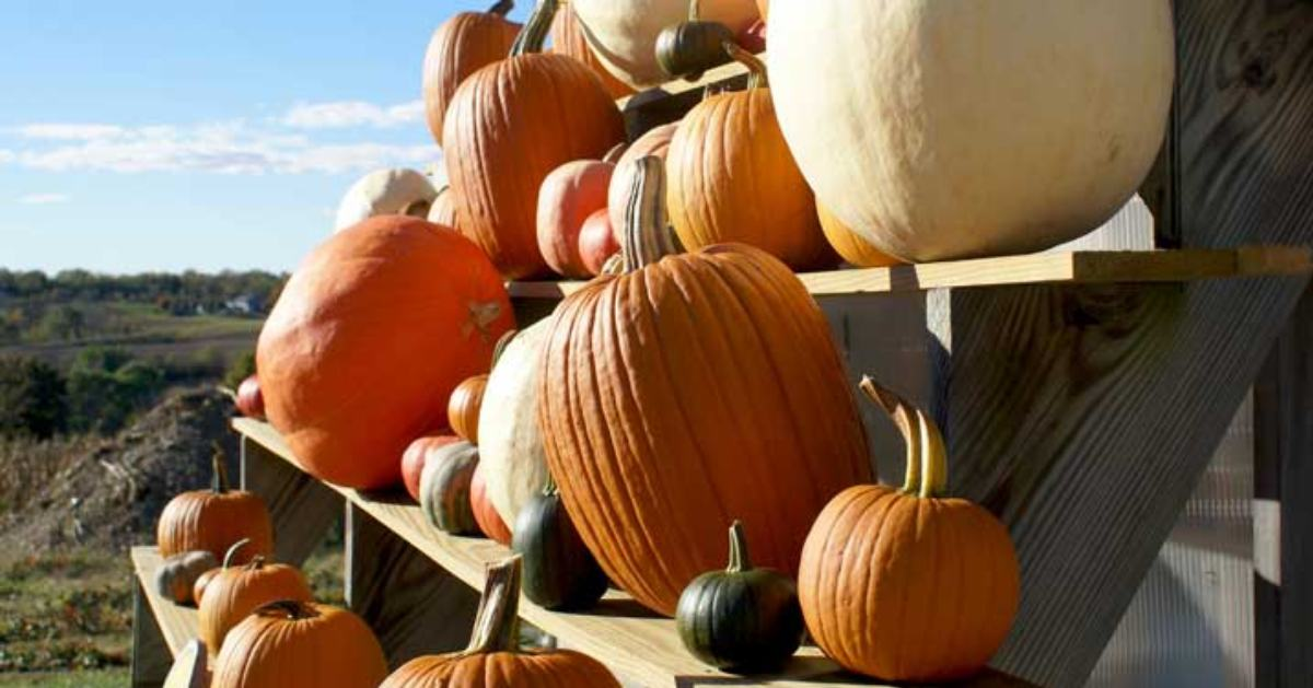 pumpkins on a wooden display