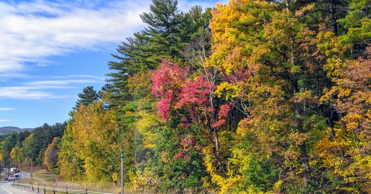 fall foliage along road
