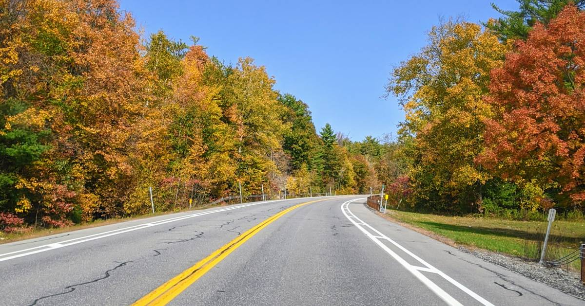 foliage along road