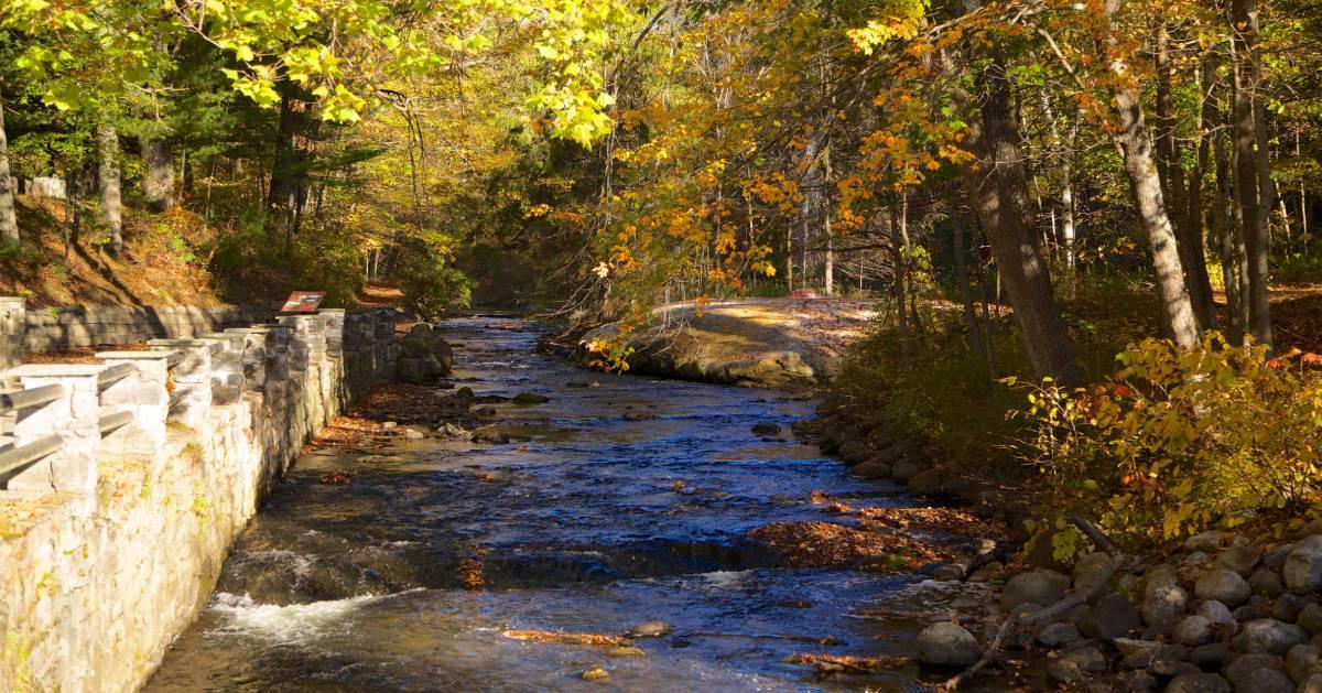 river flowing through a park
