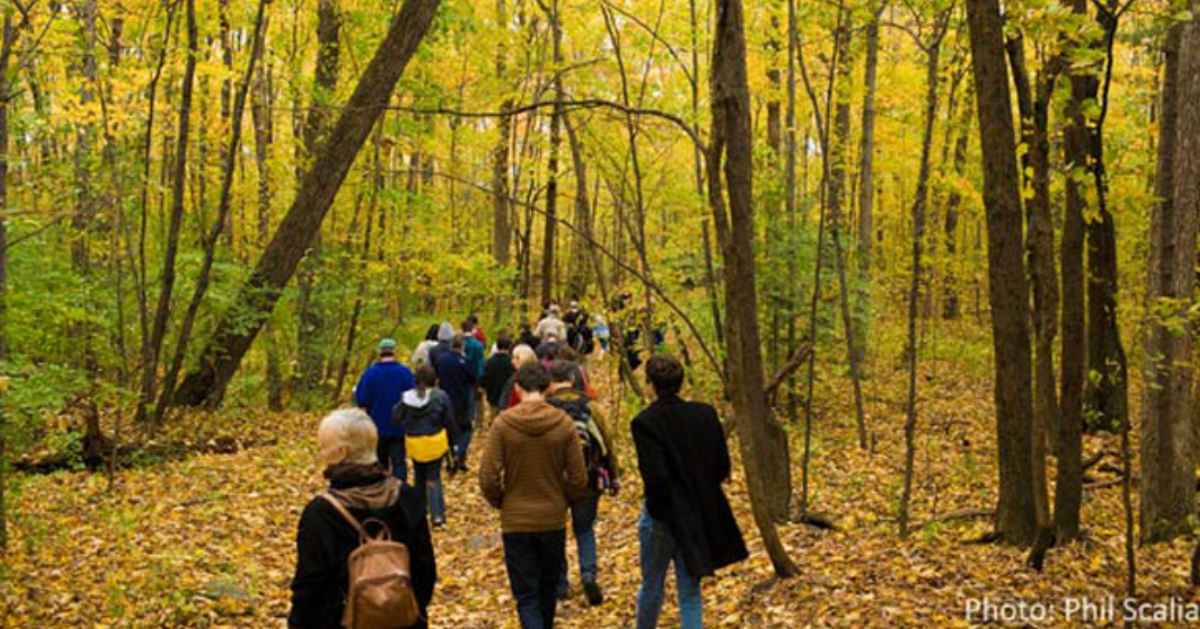 people walking through woods with fall colors on the leaves