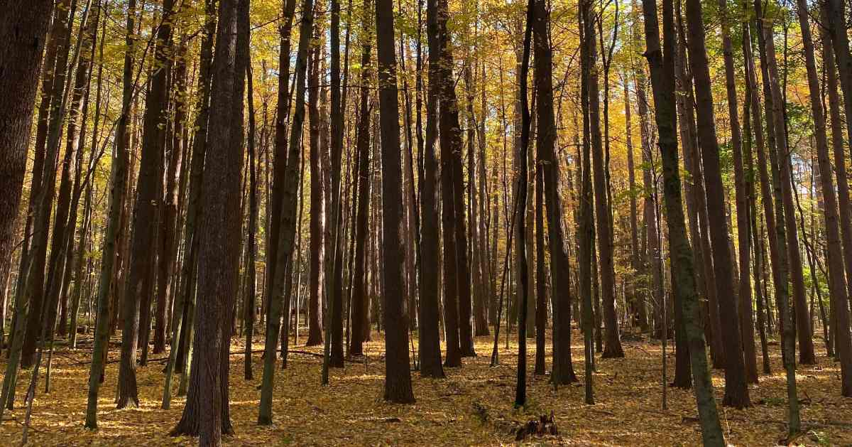 tall trees in a park during fall
