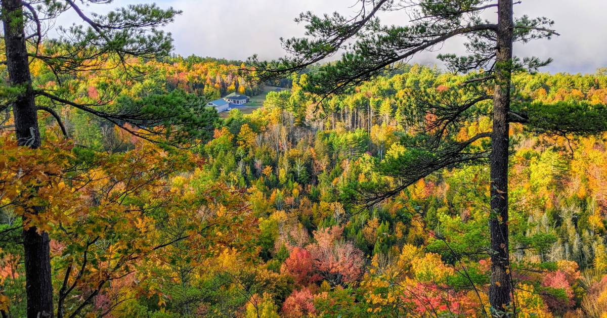 foliage view from mountain