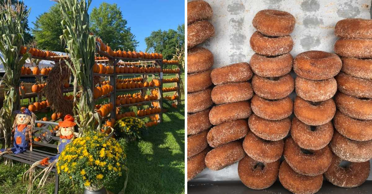 left image of pumpkin display, right image of cider donuts