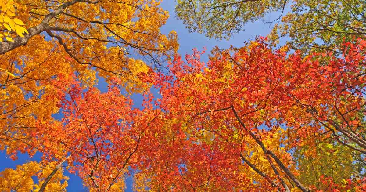 bright orange leaves on trees