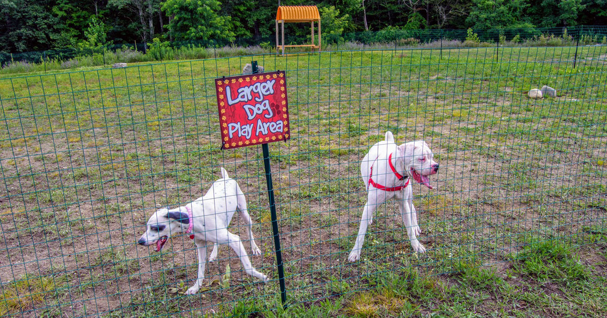 a play area for big dogs in a dog park
