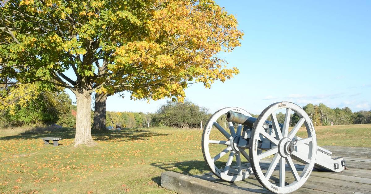 cannon near trees