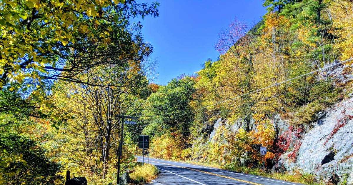 road with fall foliage