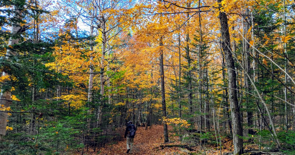 man hiking in woods in fall