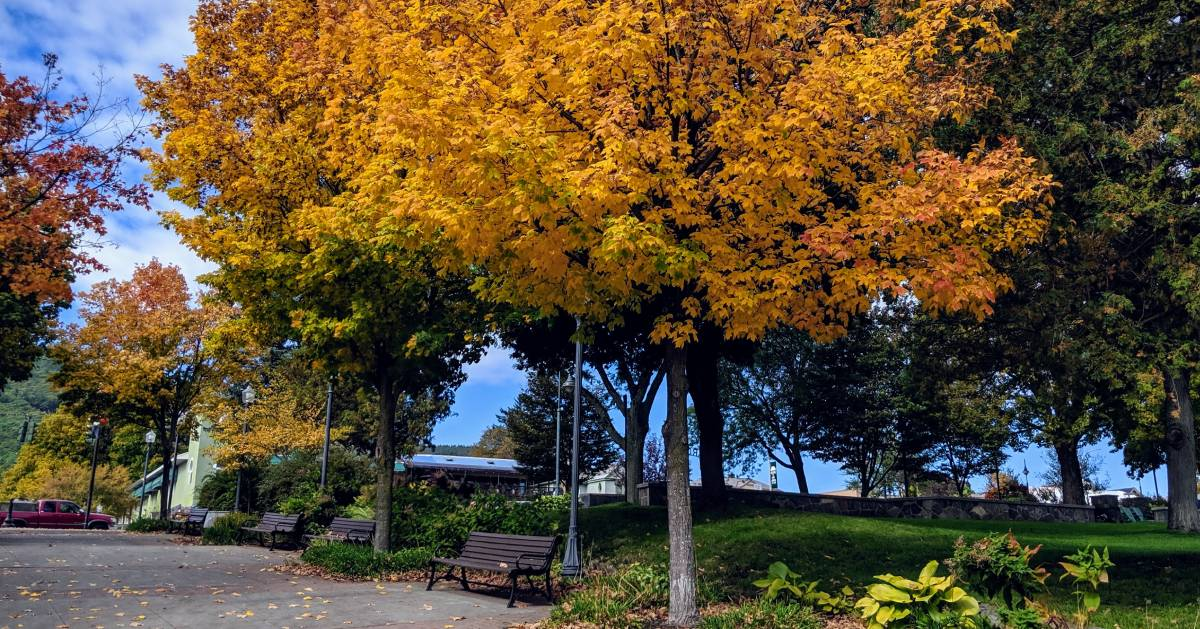 bench and tree in the fall