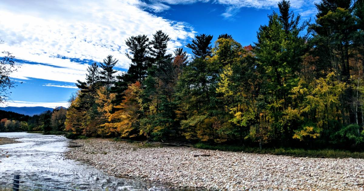 fall foliage on trees by a river