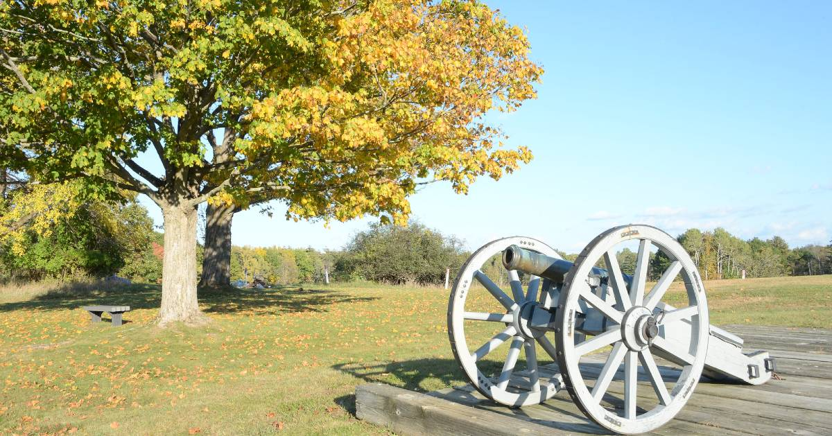 cannon near tree and bench