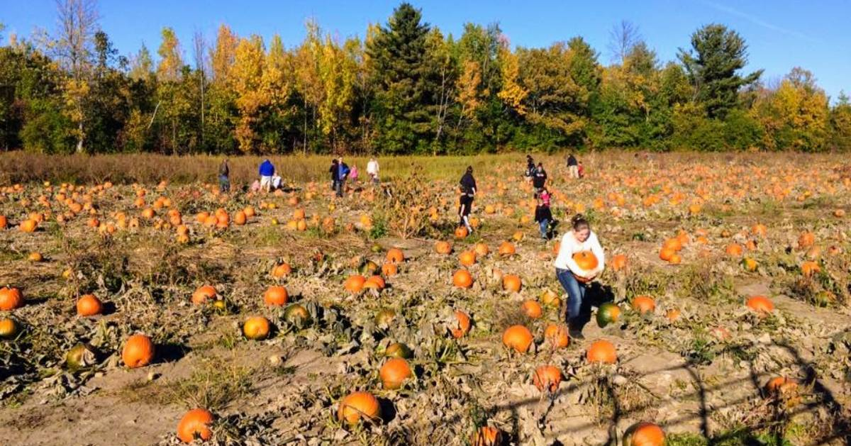 people in a pumpkin patch