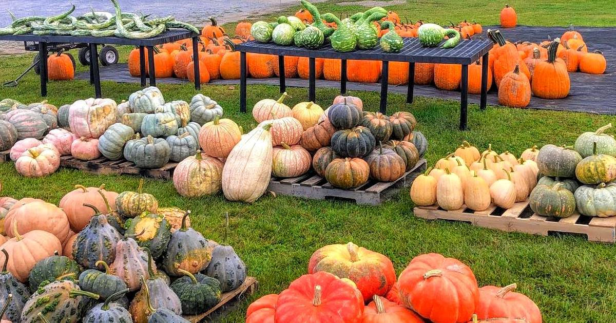 pumpkins and gourds on display