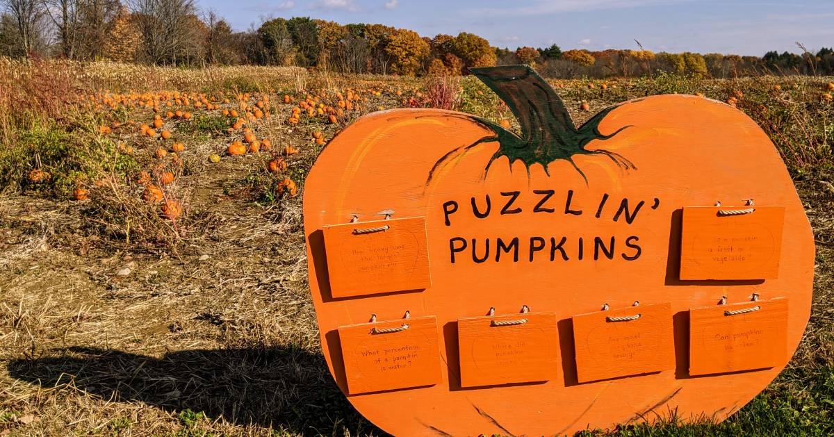 Puzzlin' Pumpkins in front of pumpkin patch