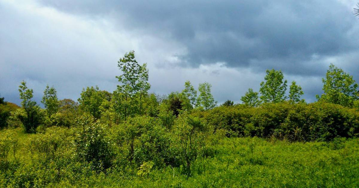 storm clouds over trees and field